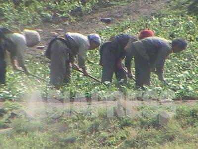 草取りに精を出す農民の姿を中国側から捉えた。疲弊した様子が国境の川を越えて伝わってきた。(2005年4月 咸鏡北道 中国側より石丸次郎撮影)