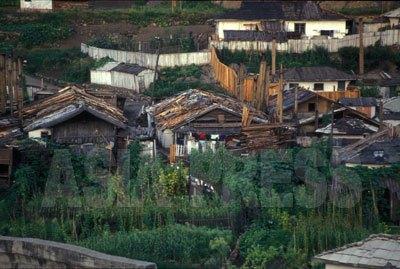 どの家の庭にも所狭しと野菜が植えられている。貴重品の瓦が屋根に見えない。(2003年9月両江道恵山市 中国側から石丸次郎撮影)