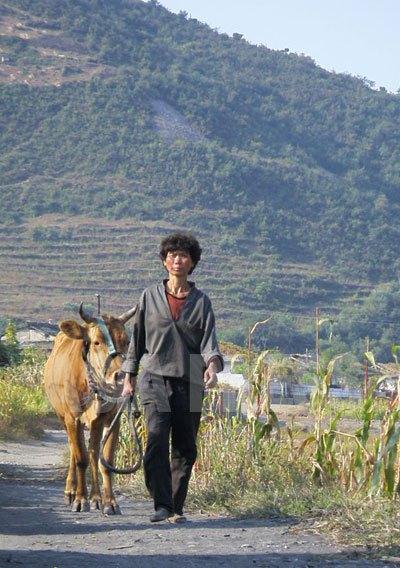 江東郡は平壌市に属するが、農村が広がる。200近い軍需工場もあるという。(2008年10月 チャン・ジョンギル撮影)