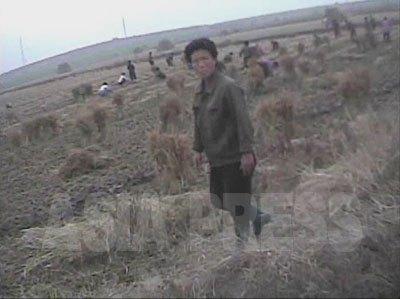 1 秋の収穫に動員された女性。(2008年10月下旬海州市西艾(ソエ)洞 シム・ウィチョン撮影)