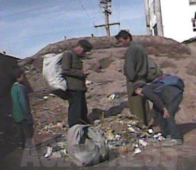 ゴミ捨て場を漁る家族コチェビ。(2008年10月海州市 シム・ウィチョン撮影)