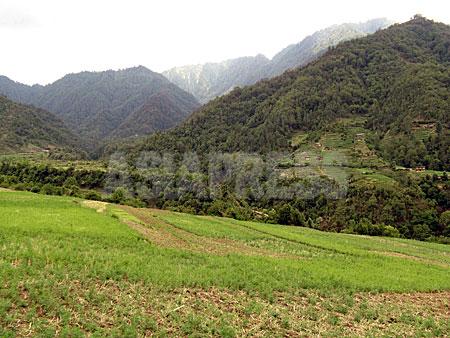 ロルパ郡タバン村にあるマオイストのコミューンから見たジャルジャラ山(雪をかぶった山)。この山は人民戦争の象徴となった。(撮影:小倉清子)