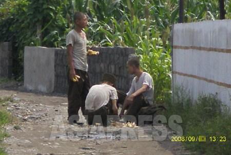 住民の畑で盗んだトウモロコシの皮をむいている人民軍兵士。痩せているのが分かる。2008年8月平壌市江東(カンドン)郡。撮影 チャン・ジョンギル(アジアプレス)