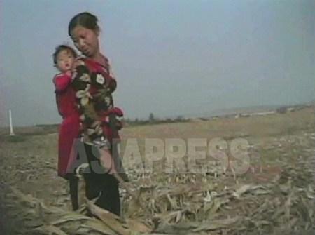収穫後のトウモロコシ農場で落穂拾いをする女性。2008年10月 撮影:「リムジンガン」沈義川(シム・ウィチョン)記者 (c)アジアプレス
