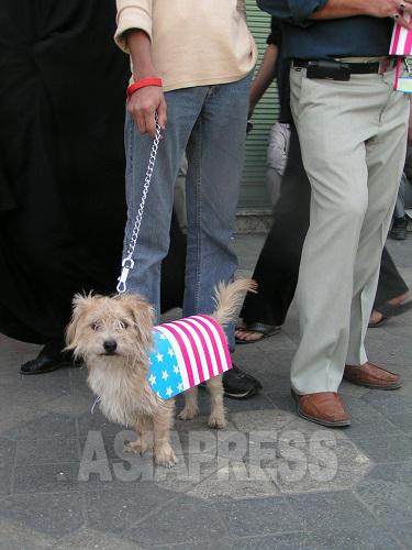 政府主導の反米集会で見かけた「反米犬」。イスラムでは、犬は不浄な動物の最たるものであり、「敬虔なムスリム」が犬を飼うことは決してない。このような官製集会では攻撃の対象にもなりかねず、犬も「反米」の衣を纏う必要がある。
