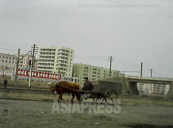 線路沿いの道を牛車が通る。遠くの赤い看板には「未来に向けて勇気百倍前進しよう!」というスローガンが見える。2013年3月平安南道で取材協力者が撮影。