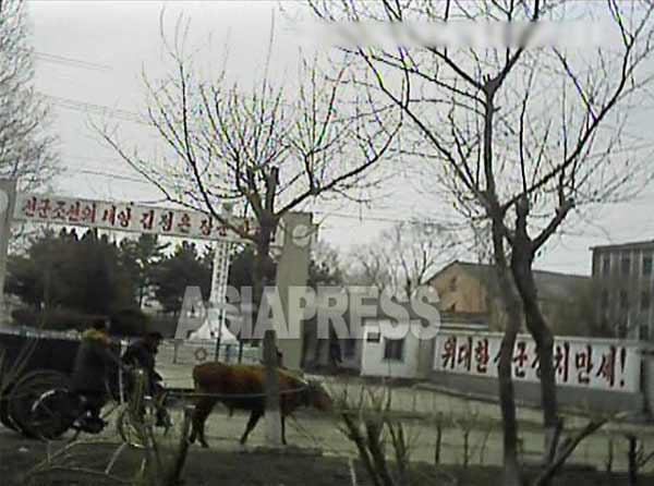国家施設と思われる建物の前を通る牛車。背後の看板には「先軍朝鮮の太陽 金正恩将軍万歳!(左)」「偉大なる先軍政治万歳!」というスローガンが掲げられている。2013年3月平安南道で取材協力者が撮影。