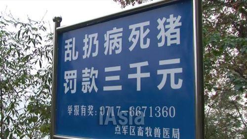 「病死した豚を捨てたら罰金3000元(約5万1000円)」と書かれた看板. 写真 2013年11月湖北省宜昌市