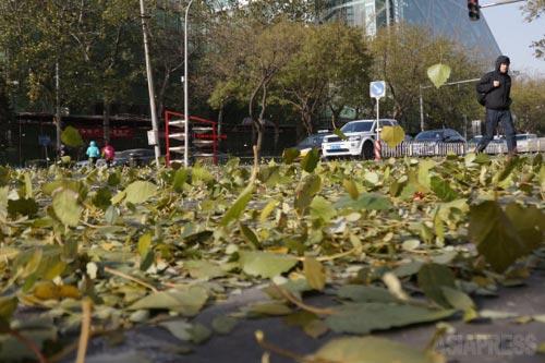 強風にあおられた落ち葉がアスファルトの上を踊る。 2014年11月30日 北京 芳草地にて 撮影 宮崎紀秀