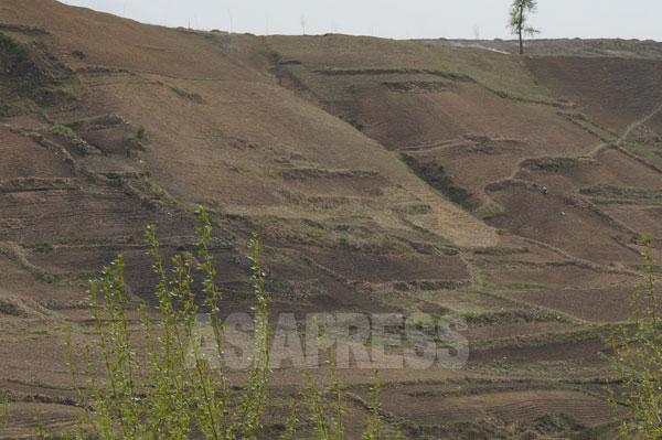 荒廃した北朝鮮の山2 山全体が「個人畑」で覆われている。上記写真と同様の場所で撮影。