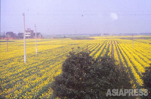 かつて日中戦争で戦場となった中国の農村地帯 撮影 吉田敏浩