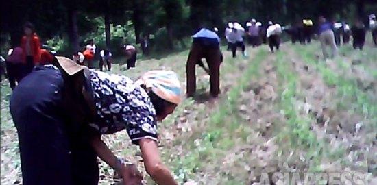 <動画・北朝鮮> 農村動員に不満を吐露する北朝鮮住民