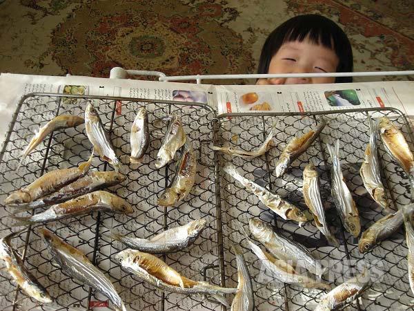 ペルシャ湾産の謎の小魚で妻がこしらえた干物。あぶって食べると美味だった。