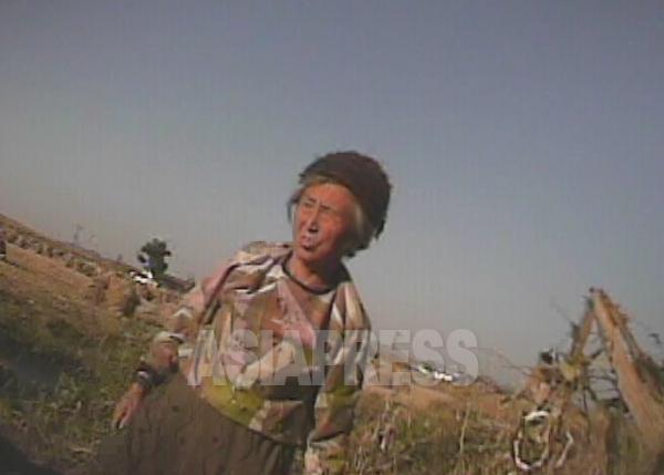 収穫後の畑でトウモロコシの落穂を探す老女。2008年10月黄海北沙里院(サリウォン)市の農村にて撮影シム・ウィチョン(アジアプレス)