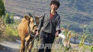 <北朝鮮内部>今年も農業不振は深刻 凶作の昨年より生産低下か 財政難と農民の建設動員で