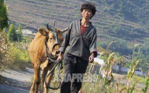 <北朝鮮内部>「隠し畑」の全廃を命令 個人農許さずと強行 農民は餓えを心配