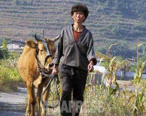 <北朝鮮内部>都市の貧窮者が農村に逃亡続々 なぜ? 「物乞いや盗みまで」 当局は監視・警戒