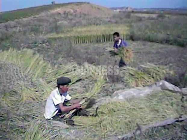 【写真特集】困窮する農村の姿(1)
