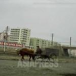 북한 어디서나 볼 수 있는 우마차