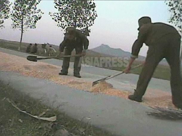 옥수수를 길에 널어 건조 작업을 하는 병사들. 대부분의 부대에서 경작, 수확, 탈곡 등 '먹기 위한 작업'도 병사들의 일상 업무이다. 2008년 10월 황해남도에서 촬영 심의천(아시아프레스)